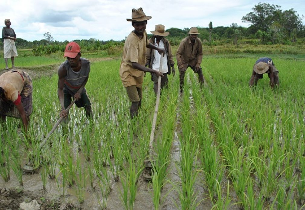 Madagascar rice regions triple yields with support from AfDB