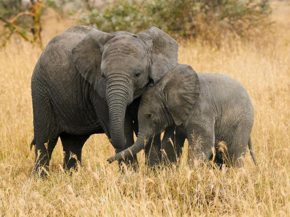 How IoT tech is helping African rangers protect endangered elephants from poachers