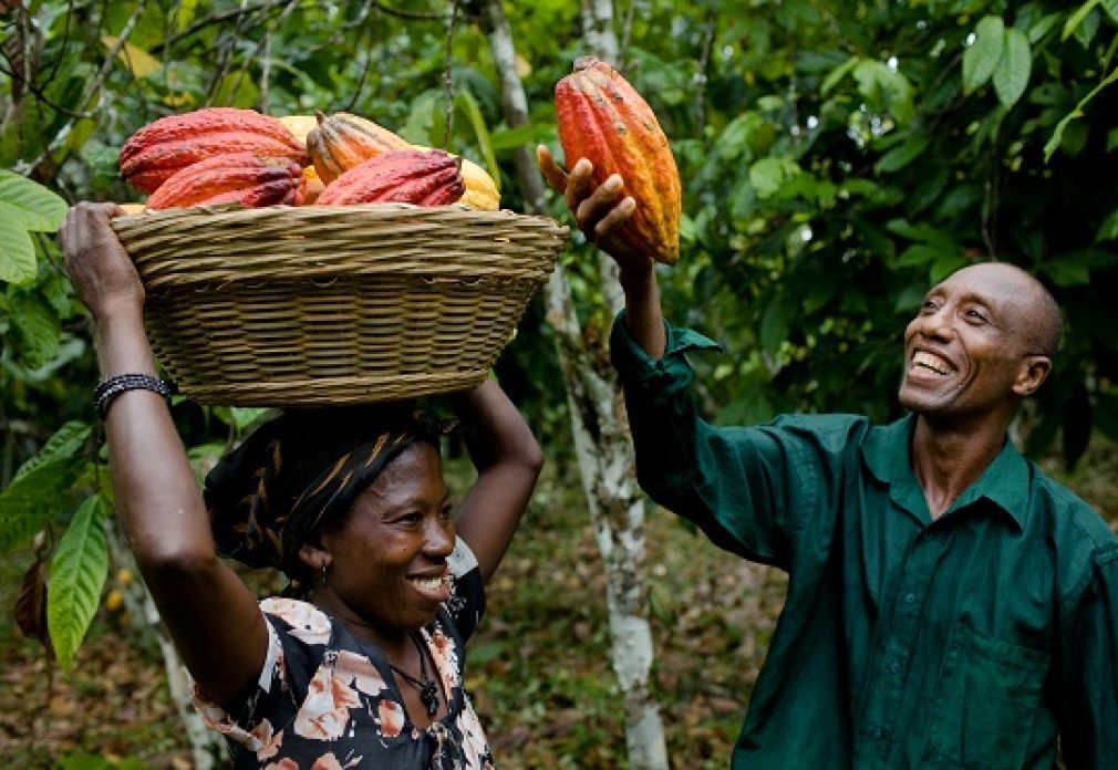 Solidaridad West Africa and EU launch programme to boost cocoa farming in Liberia